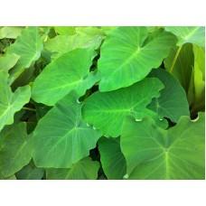 Colocasia leaves Pickle